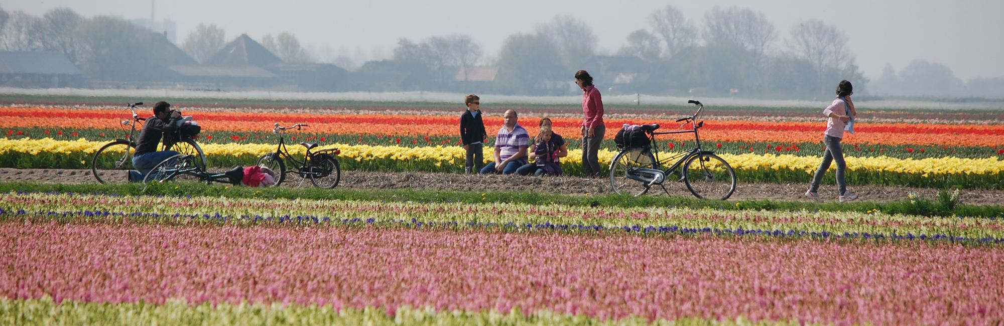 Dutch Bike Tours Radreisen Tulpen Tour